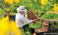 2017全国蜂业大会暨中国蜂产品博览会将于10月27日至29日在宝鸡举行