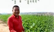 【沙窝萝卜 一乡一味】天津传统特色出口级农产品 11月初成熟 有4个月销售期