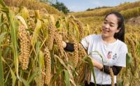 【米脂米妹】米妹诚邀各位亲一起来我美丽的家乡赏梯田、打谷子、吃新米