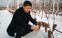 【农说吕不白 第183期】央视记者辞职返乡种冰葡萄,寒冬之后是春天