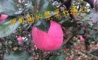 【宜川苹果 伊甸园家庭农场】诚招各大城市代理,支持一件代发