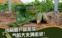 【沙窝萝卜】天津小沙窝村种植面积300亩 欢迎社区社团、水果连锁前来考察对接合作!