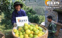 【秭归脐橙供应链】欢迎有意向的团队,渠道,代理,社区合伙人对接共赢!