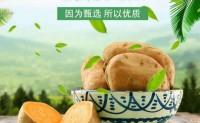 【沂蒙山老黄皮地瓜】烤地瓜专用地瓜!而且耐放 放的时间越久越蔫吧越香甜油越多!
