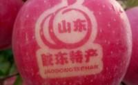 【晓贝家·烟台红富士苹果】可满足平台及微商团队发货,支持一件代发!欢迎对接!