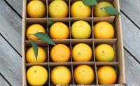 【益初农场脐橙】预售启动啦!超级好吃的橙子,今年你可别再错过咯!欢迎各大渠道对接合作!