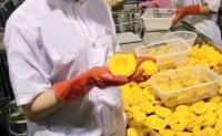 【鸿兴源食品 黄桃罐头】为线上团队寻找更多优质生鲜农特产品 期待各优质平台洽谈合作!