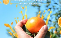 【武鸣沃柑:鸣沃】水果空档期1月中旬上市。可批发、落地配,欢迎对接合作!