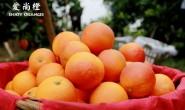 【爱尚果:资中塔罗科血橙】年货佳品,有机新系血橙,原产地发货,现摘现发!