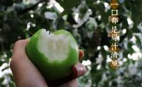 """【魔牛御枣-台湾牛奶枣】俗称""""水果维生素丸""""。 欢迎优质渠道、团队对接合作共赢!"""