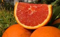 【秭归中华红橙 橙色年代】 专注秭归优质脐橙供应链,欢迎各渠道平台合作共赢!