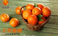 【长寿春橘 长寿地标农产品】正在招募长寿春橘的代理商,有兴趣的欢迎对接合作