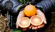 【塔罗科血橙 四季优选】4A级风景区长寿湖的塔罗科血脐!欢迎大家咨询,对接合作!