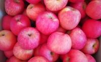 【胶特:烟台红富士苹果】支持落地配和一件代发,可满足平台及微商团队发货!