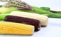 【三工滩:有机糯玉米】有黑糯、白糯、甜加糯、黄糯四个品种,欢迎有实力平台、团队合作!