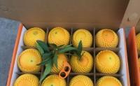 【橙天下 专注于秭归优质脐橙产品供应链】欢迎各大渠道商对接合作共赢!