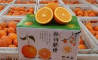 【湖北秭归:秭归伦晚甜橙】欢迎有需求的渠道,团队洽谈,对接合作!