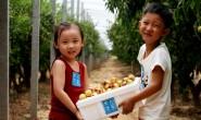 【陈星农场】有特色水果的产地新农人提前沟通,愿我们通过合作成为利益共同体