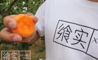 【飨实®蜜杏|原名:崂山蜜杏】青岛地理标志产品,全网公开寻找区域合作伙伴