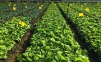 【有机蔬菜】提供蔬菜宅配服务,配送当季最新鲜的有机蔬菜,清晨采摘,当天配送