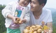 【四川万源 马尔科黄心小土豆】欢迎有意向的平台,渠道,社区合伙人对接共赢!
