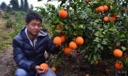 【一品优:赣南脐橙】现主要销售全国应季水果,欢迎各大团队对接合作!