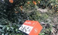 【七橙七】给您不一样的赣南橙!两个工厂同时发货,保障供货能力和时效!