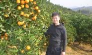 【湖南永兴冰糖橙】今年永兴冰糖橙品质特别好,欢迎大家洽谈合作!