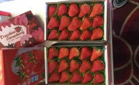 【祝家沟 庄河草莓】全程有机标准种植,欢迎各大渠道,团队对接合作!