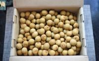【泰国象牙龙眼 墨西哥玛雅之花蜂蜜】小罐装合适社群 微商渠道销售 欢迎对接