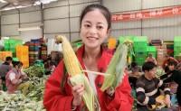 【云南水果玉米】可以生熟两吃,爆浆,化渣的只有他,欢迎对接合作!