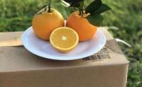 【冰糖橙:洪橙】种植基地地处雪峰山脉和凉山山脉之间,欢迎对接合作!