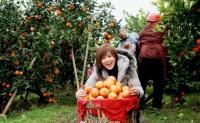 【年货佳品:资中塔罗科血橙】现合作社规摸1800余亩,年产量5百万斤左右!