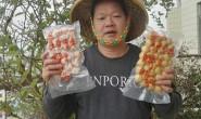 【渔哥鱼丸】专注鲜鱼丸生产36年,目前有10多款鱼丸鱼饼产品,达出口标准