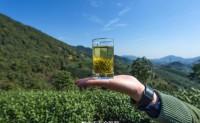 【卢新龙井19年新茶即将预售】支持一件代发和批量入仓,一般会在五月份之前售罄!