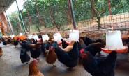 【绿壳土鸡蛋】全程无抗养殖基地,支持OEM、一件代发、落地配。欢迎合作咨询!