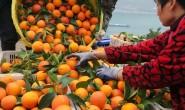 【妞妞橙:秭归脐橙】日发货量五千件左右,支持一件代发,社群团购,落地配,整车发货等