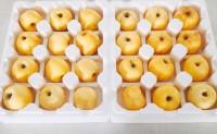 【维纳斯黄金苹果】30余万斤维纳斯,线下,落地配,一件代发,实力供货!