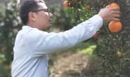 【高山茂谷柑】漳州的甜蜜柑橘正当季,开始大量采摘发货中,欢迎对接!