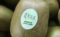 【云南猕猴桃】在云南蒙自种植2000余亩有机红心猕猴桃,欢迎对接合作!