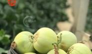 【真真正正的马连庄甜瓜】薄脆绿甜,颗颗脆甜,瓜汁如蜜,卜卜脆!等你来撩