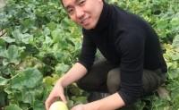 【蒙山小蜜罐全渠道上线】马连庄甜瓜优质品种,可供应一件代发,落地配!欢迎对接