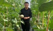 【海阳:网纹瓜、白玉黄瓜】日发货能力5000-10000票,欢迎各渠道平台对接!