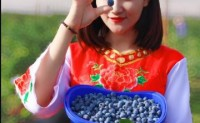 【云南高原露天蓝莓】日发货量峰值5000单,支持一件代发,专车,落地配,欢迎渠道对接