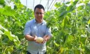 【烟台朗恩优质供应链】专做山东优质农产品,樱桃\网纹瓜\西瓜,欢迎对接