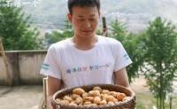 【恩施小土豆】富含有机质、硒,终端零售19.8元!引流爆款,欢迎对接合作