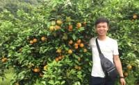 【富硒清山橙】可一件代发,物流、整车,日发货能力10000件。欢迎各渠道对接