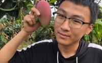 【芒果岛】广西芒果一天发10000单没有问题,会做好品控和售后,欢迎各大渠道对接!