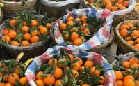 【果王陛下】专注丹棱水果,主要种植水果:爱媛、春见、不知火,凤凰李等
