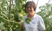 【北京大兴庞各庄西瓜】被誉为贡瓜,一件代发,落地配,供货三年,欢迎对接!